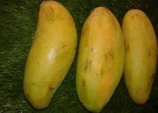 Mangga Golek